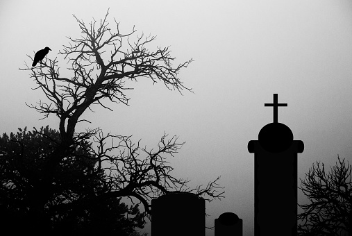 Dark and spooky tree with a crow in a cemetary
