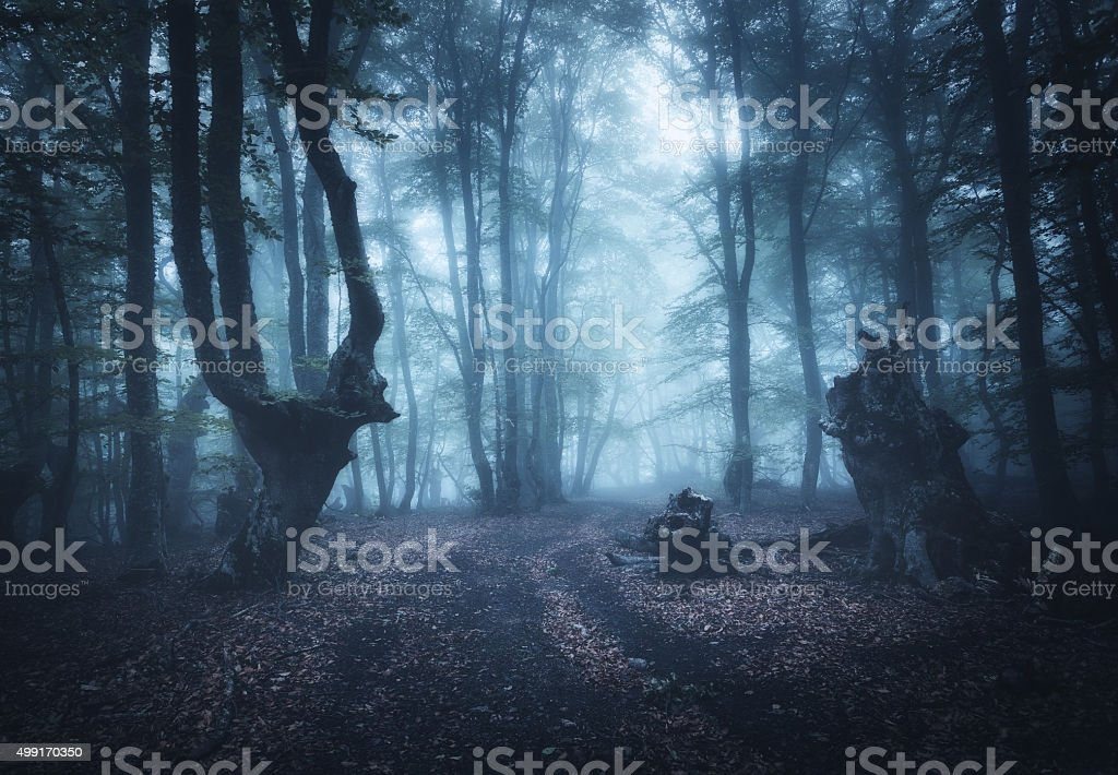 Dark autumn forest in fog. Beautiful natural landscape. stock photo