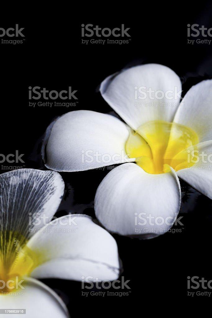 Dark Blossom royalty-free stock photo