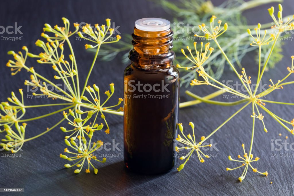A dark bottle of dill seed oil with fresh dill stock photo