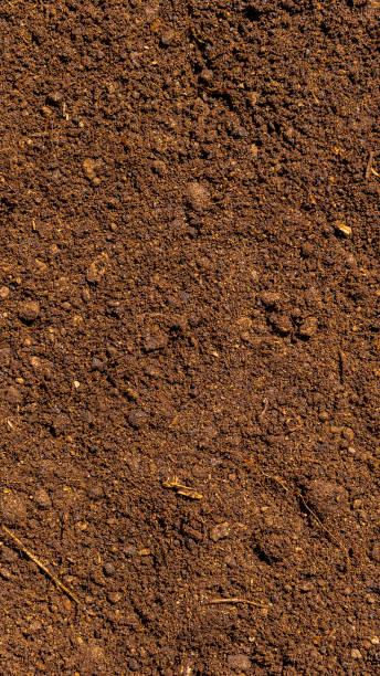 Solo fértil do marrom escuro com Peat-fundo para a agricultura - foto de acervo