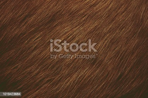 Dark brown hairy textured background. The hair are sweeping downwards towards left side.