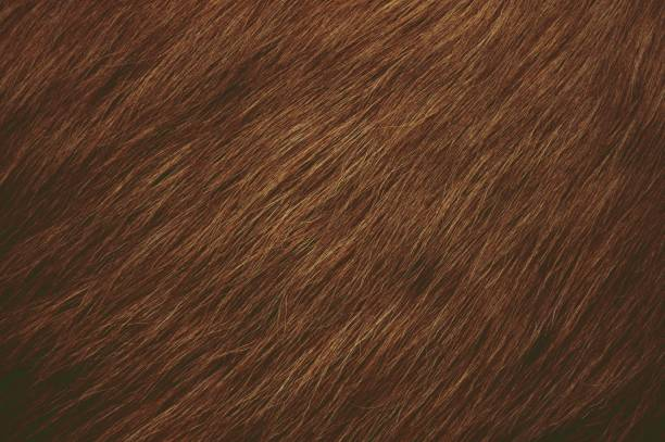 Dark brown hairy textured background Dark brown hairy textured background. The hair are sweeping downwards towards left side. animal hair stock pictures, royalty-free photos & images