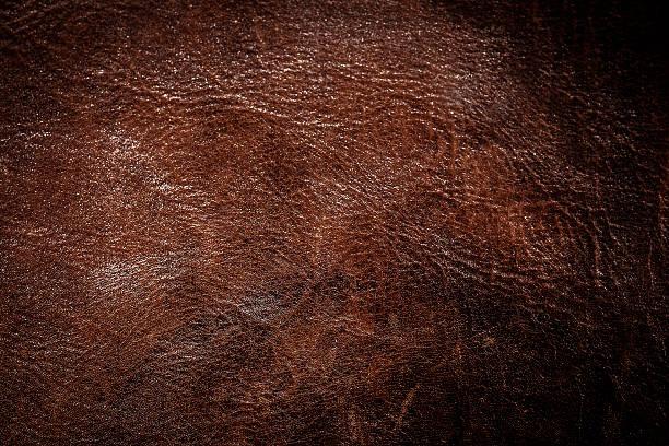 dunkelbraunes leder - wie alt werden kühe stock-fotos und bilder