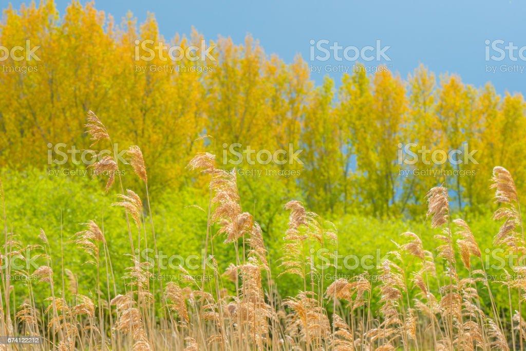 陽光下的樹上烏雲密佈 免版稅 stock photo