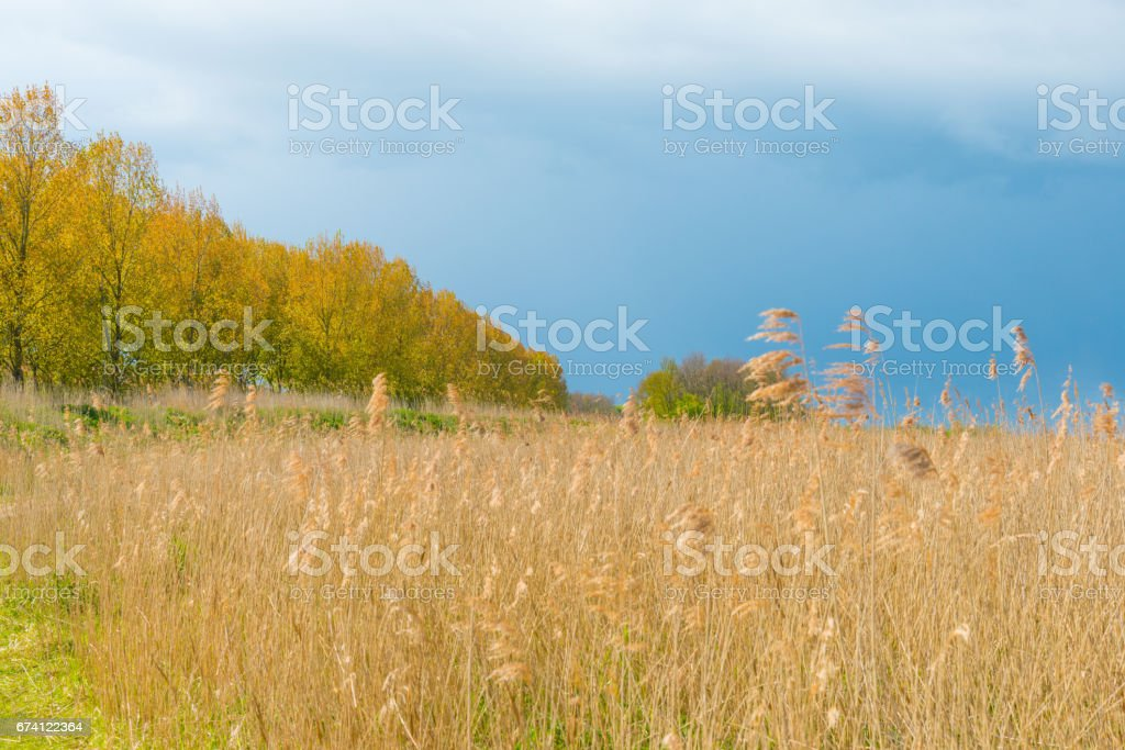 Dark clouds over trees in sunlight royalty-free stock photo