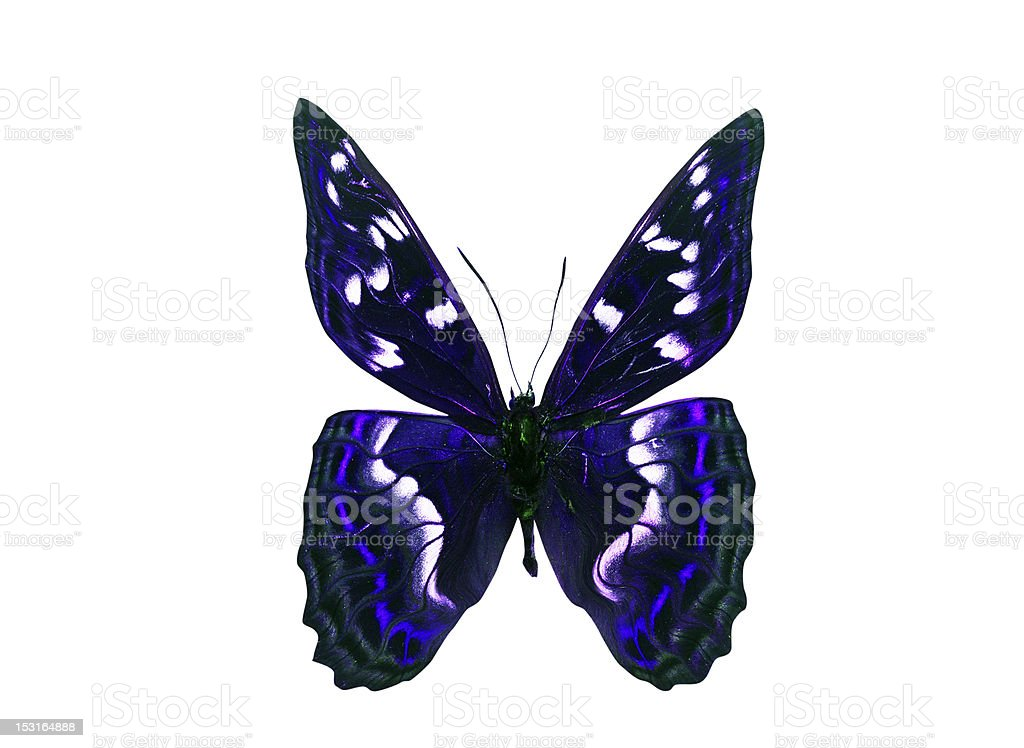 Dark Color Butterfly with violet wings. Isolated on white background royalty-free stock photo