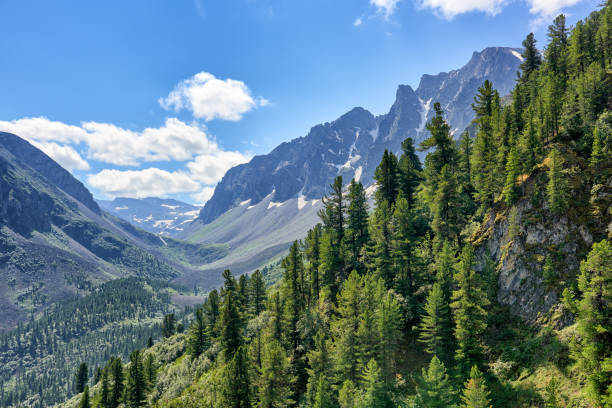 Dark coniferous taiga on mountainside in July Dark coniferous taiga on mountainside in July. Valley Arzhan-Khem. Tuva. Central Asia taiga stock pictures, royalty-free photos & images