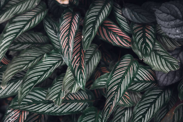 Dark faded green leaves pattern background stock photo