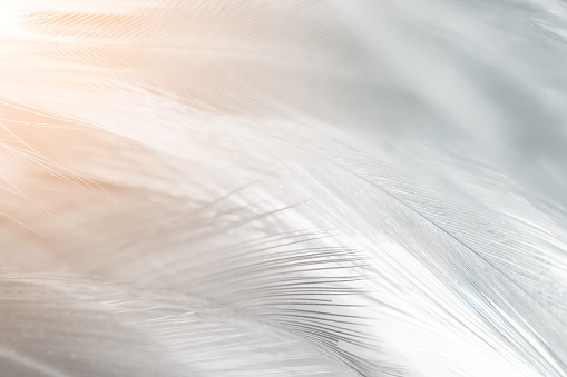 istock dark feather texture background,Light orange 1124958325