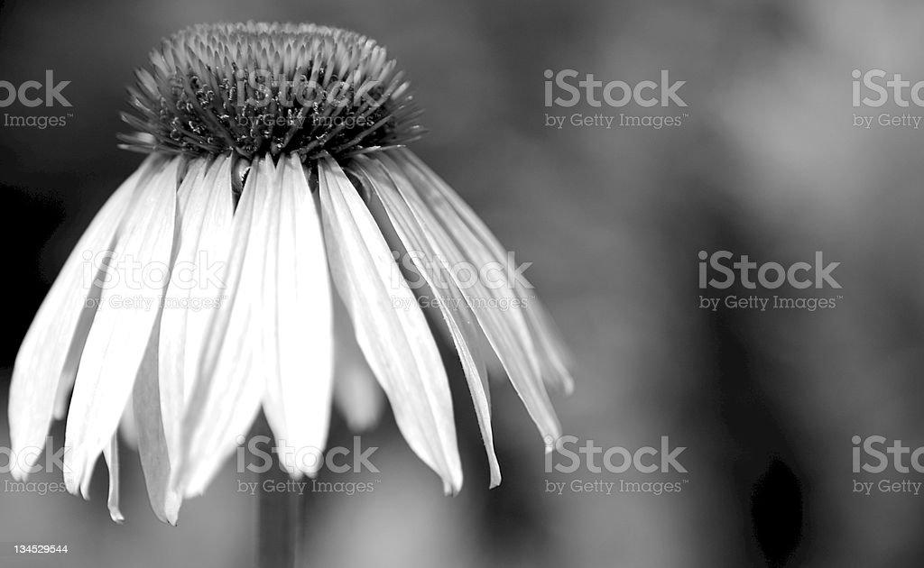 Dark Flower stock photo
