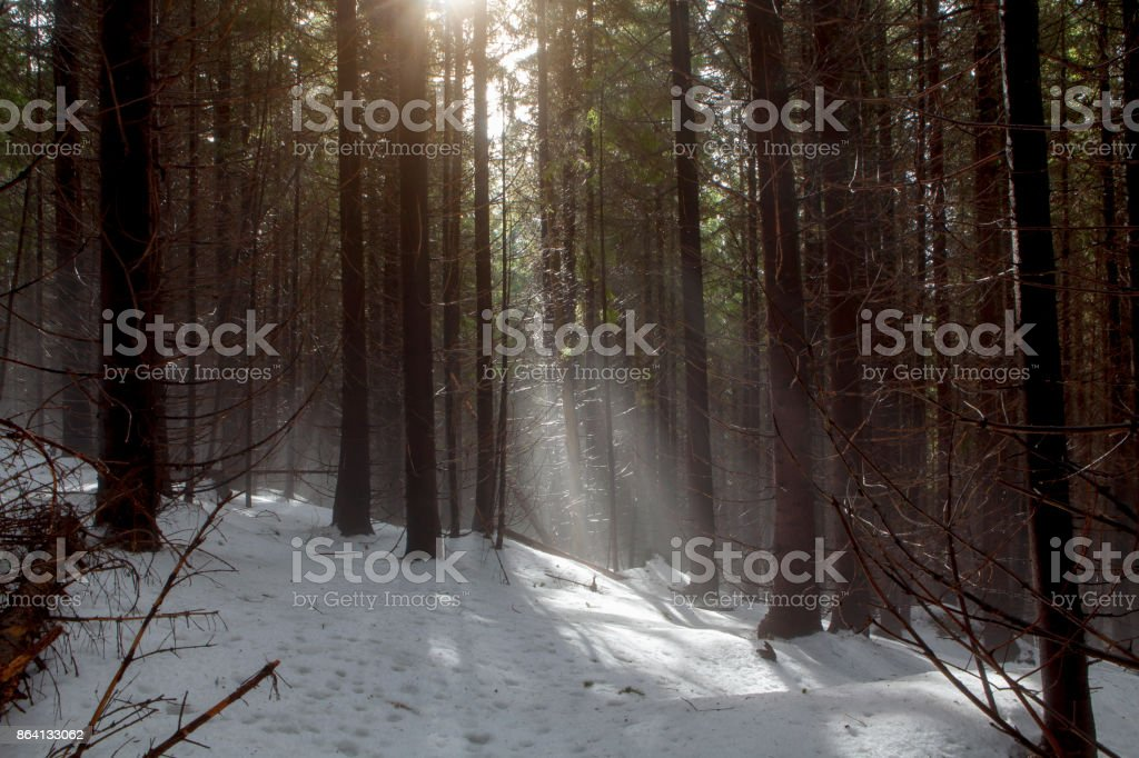 dark foggy forest royalty-free stock photo