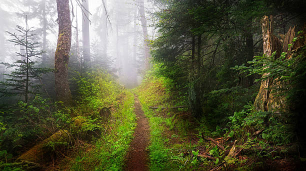 Dark Foggy Trail and Woods  appalachia stock pictures, royalty-free photos & images