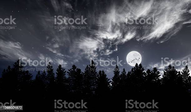 Photo of Dark Forest And Crescent Moon