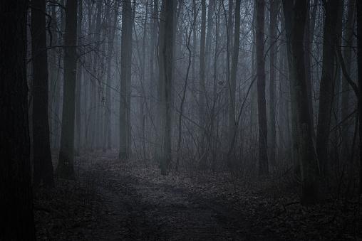 dark forest in twilight