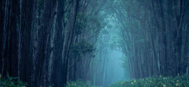 dunklen waldweg - baumwipfelpfad stock-fotos und bilder