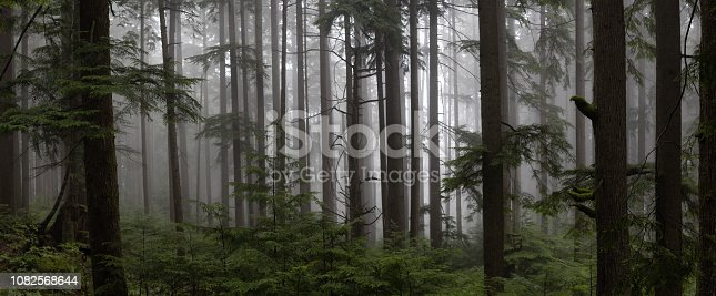 Gloomy dark forest during a foggy day. Taken in Mt Fromme, North Vancouver, British Columbia, Canada.