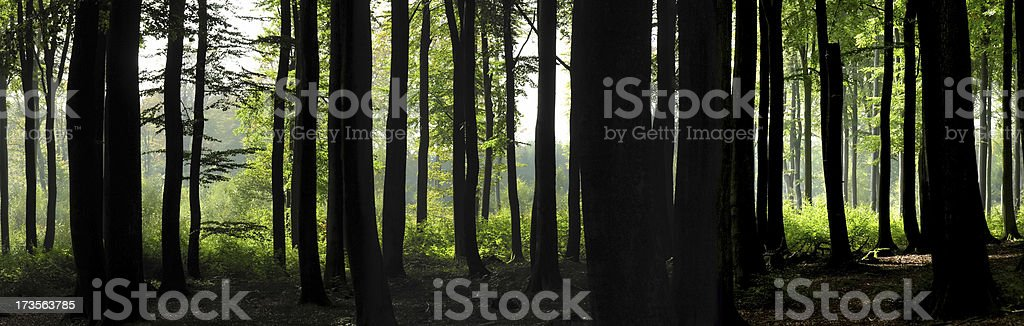 Dark Forest royalty-free stock photo