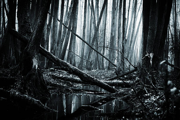 6,833 Dark Swamp Stock Photos, Pictures & Royalty-Free Images - iStock
