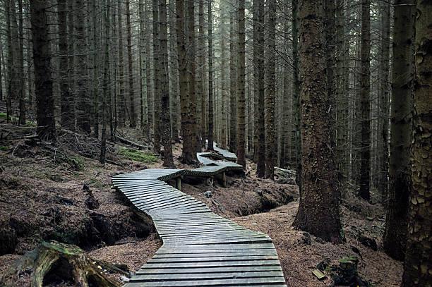 ciemny las szlak - wood texture zdjęcia i obrazy z banku zdjęć