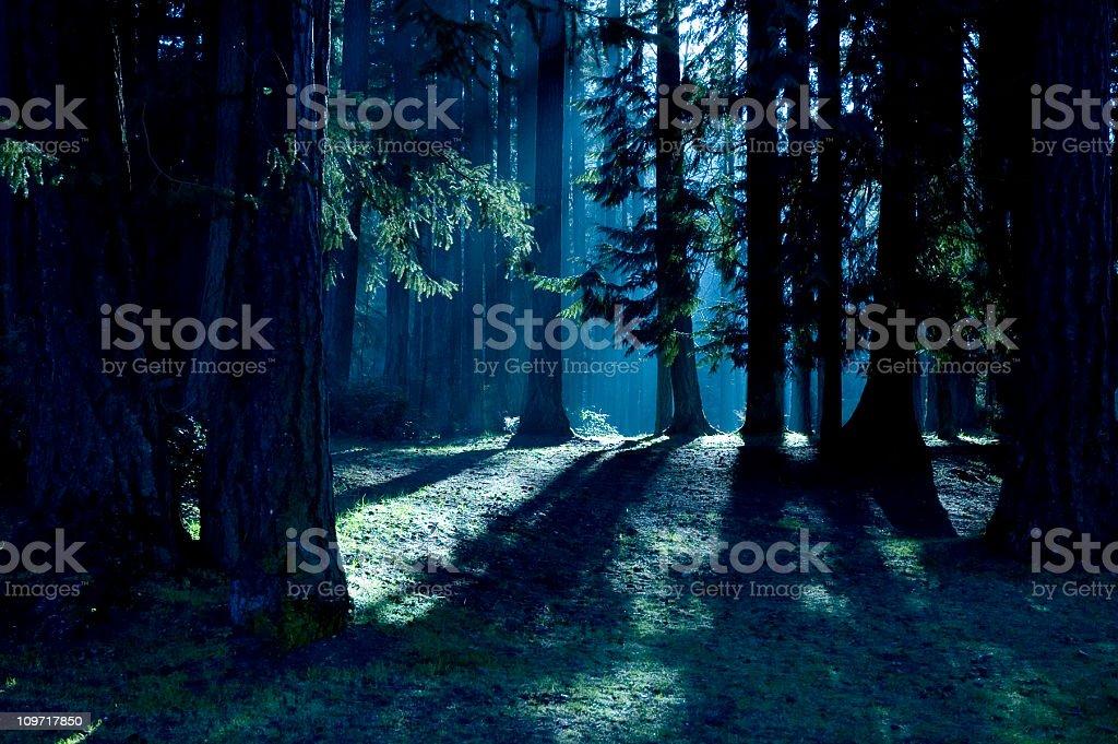 Bosque con sombras y la luz del sol - Foto de stock de Aire libre libre de derechos
