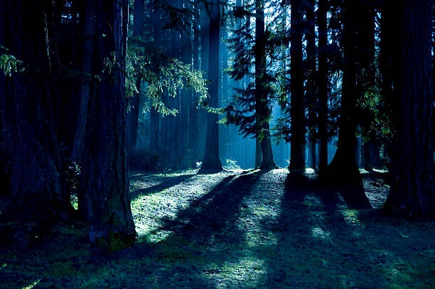 Dark forest with shadows and sunlight stock photo