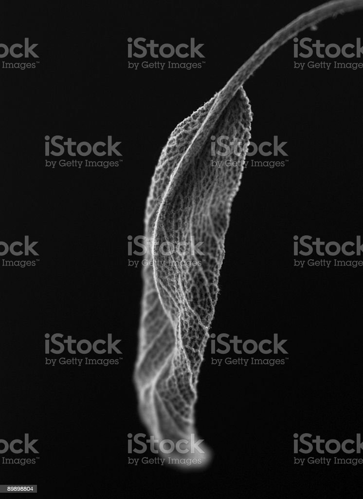 Dark Garden Series royalty-free stock photo