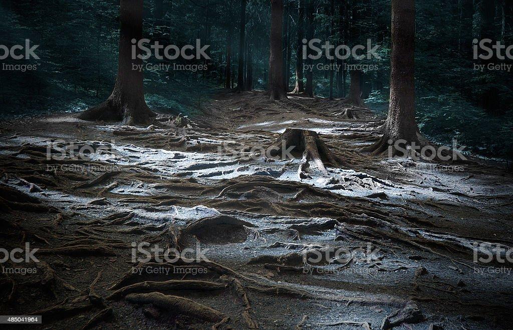 Dark glade. Somewhere in mystic wood stock photo