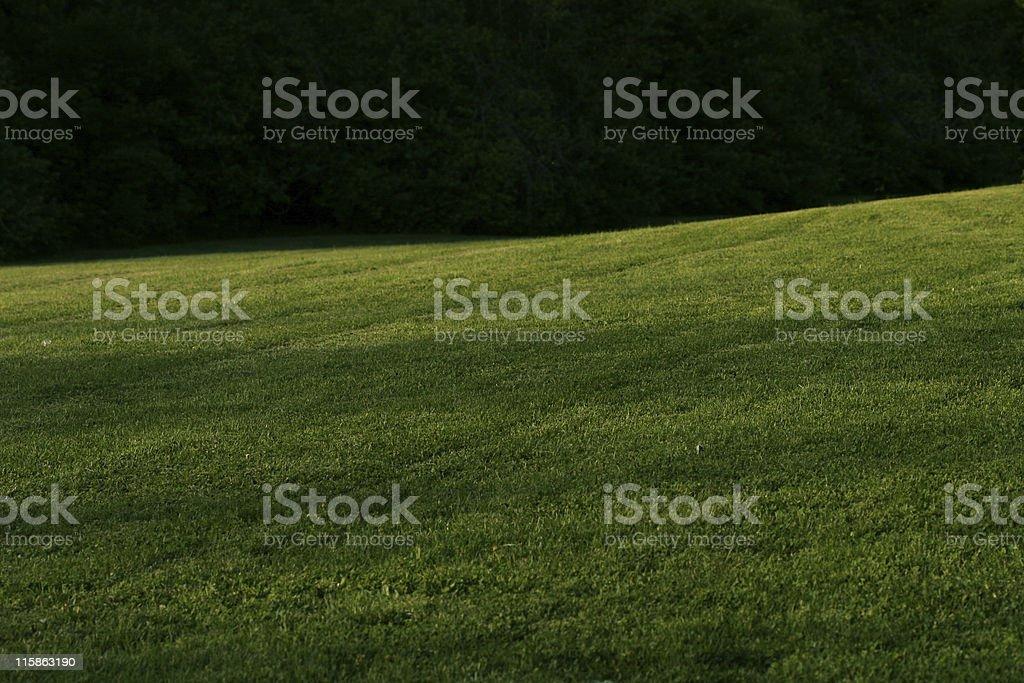 Dark Grassy Field stock photo