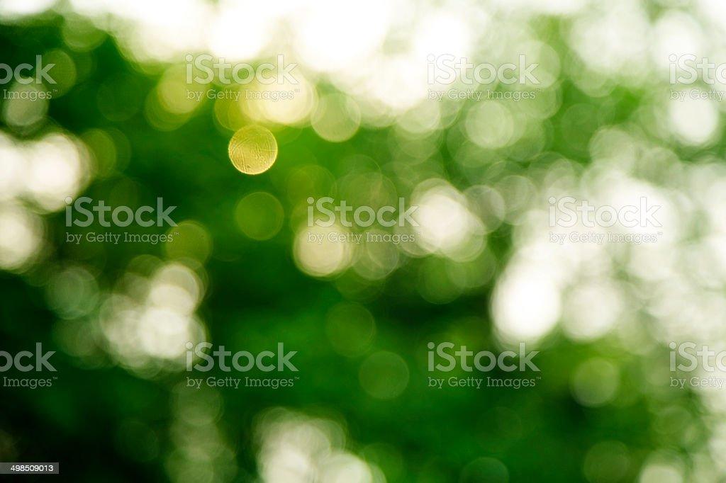 Verde Scuro E Sfondo Bianco Fotografie Stock E Altre Immagini Di