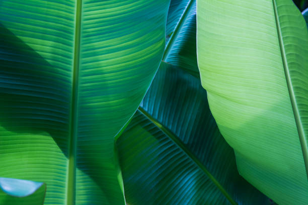 Dunkel grünes Blatt-Muster-Hintergrund – Foto