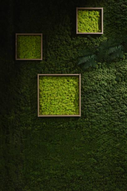 Dunkel grünes Moos Wand – Foto