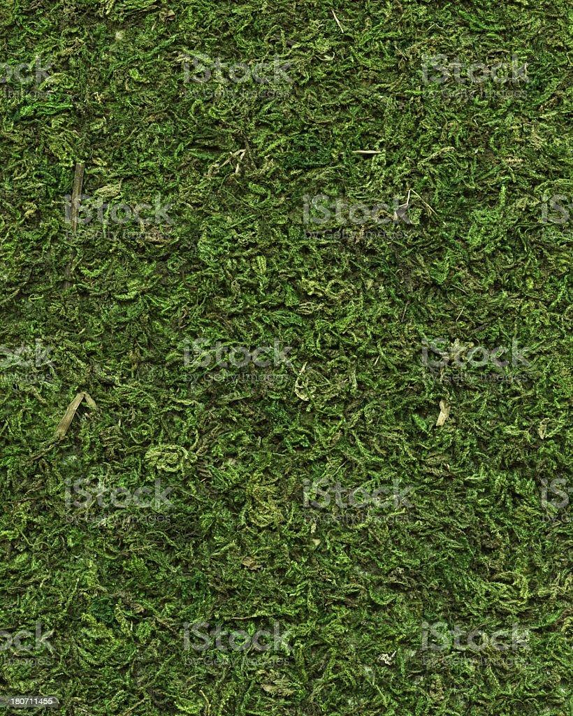 dark green natural moss royalty-free stock photo
