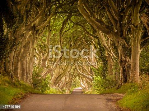 Famous Dark Hedges, County Antrim, Northern Ireland