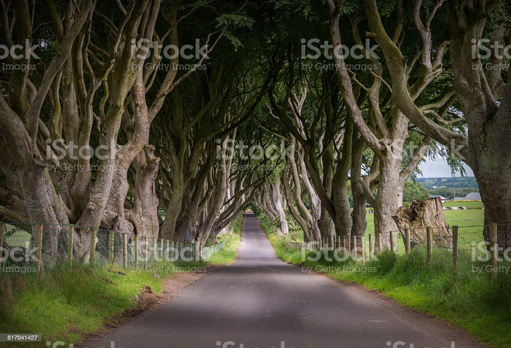 Dark Hedges in Ballymoney, Co. Antrim stock photo