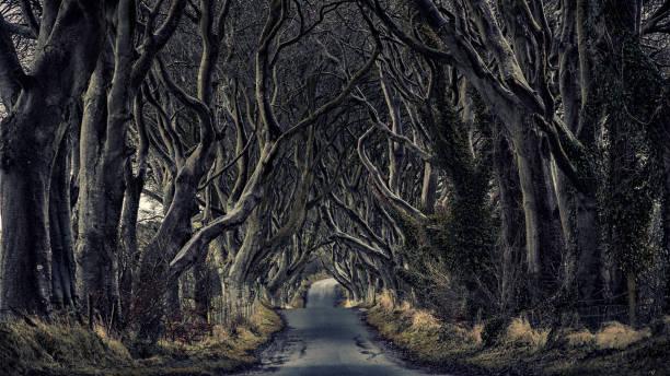 Dark hedges Northern Ireland stock photo