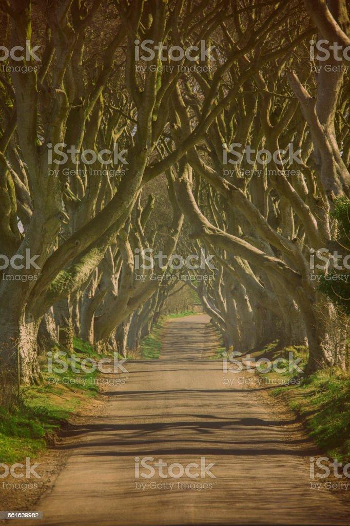 Dark hedges of Northern Ireland stock photo