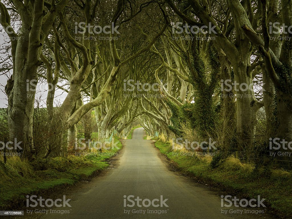 Dark Hedges road through old trees stock photo