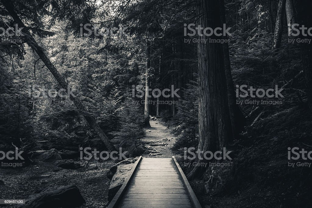 Dark hiking forest path. Black and white. - foto de stock