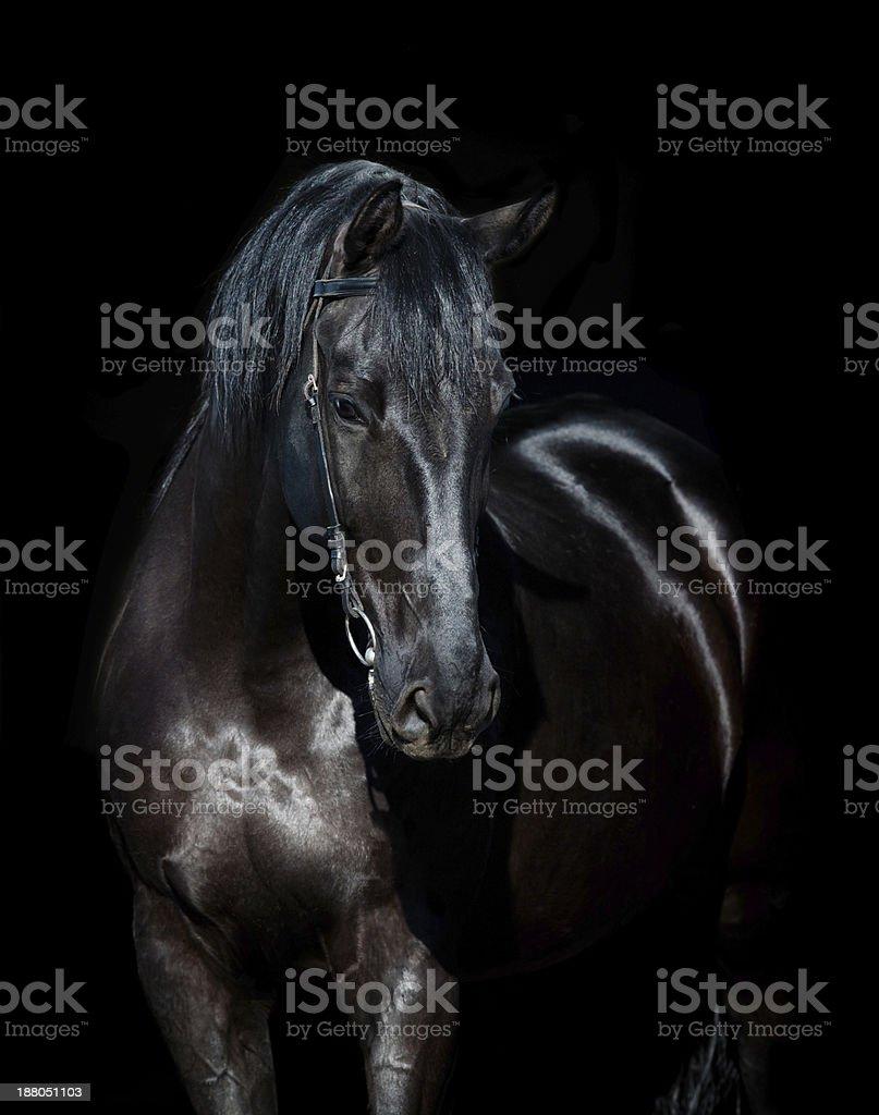 Ciemny konia na czarnym tle puste – zdjęcie