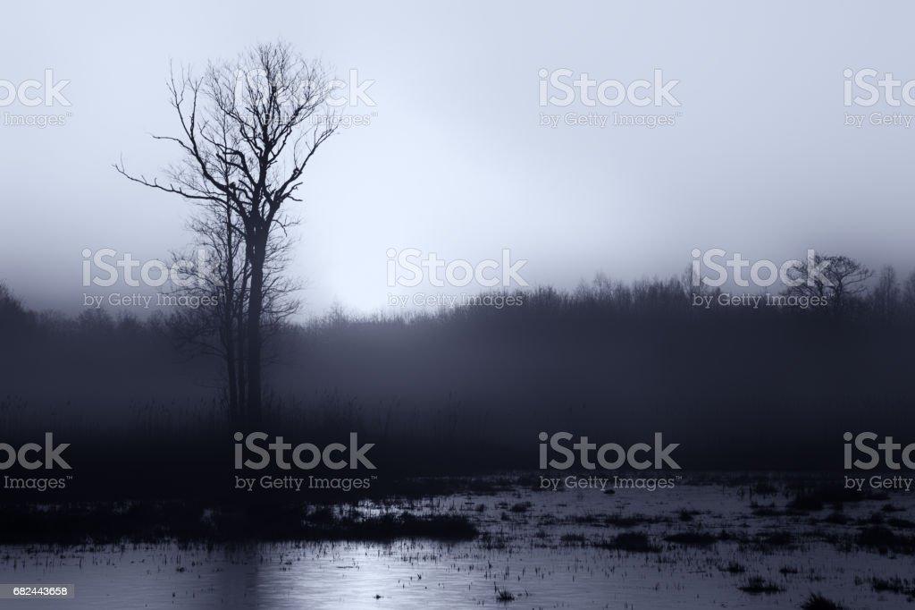 Paysage sombre photo libre de droits