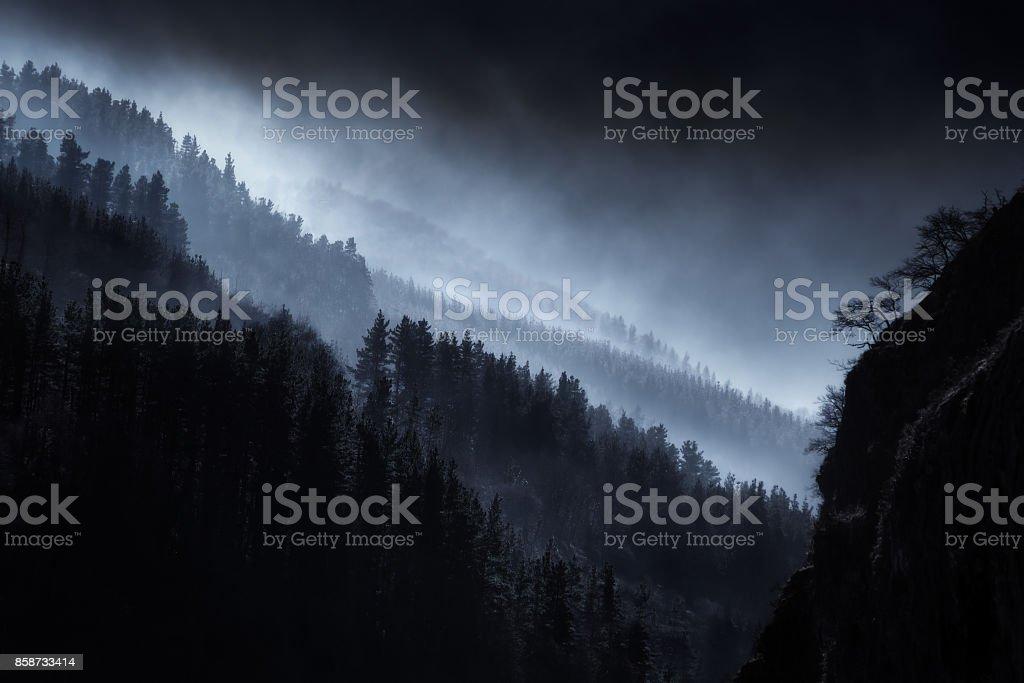 mörka landskap med dimmig skog bildbanksfoto