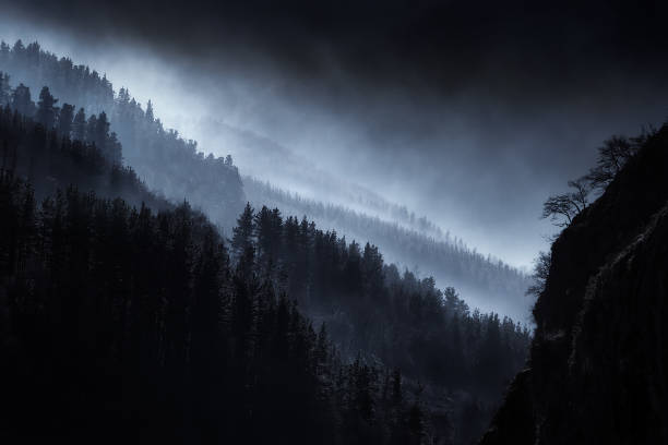 dark landscape with foggy forest - wilderness stock pictures, royalty-free photos & images