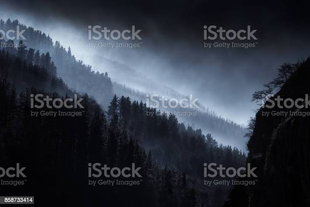 Photo of dark landscape with foggy forest