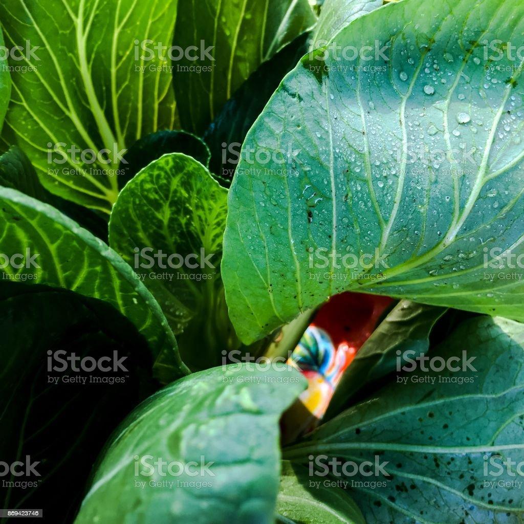 Dark leafy greens stock photo