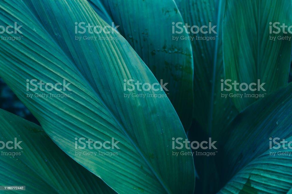 Dark Leaves background water drop Leaf surface