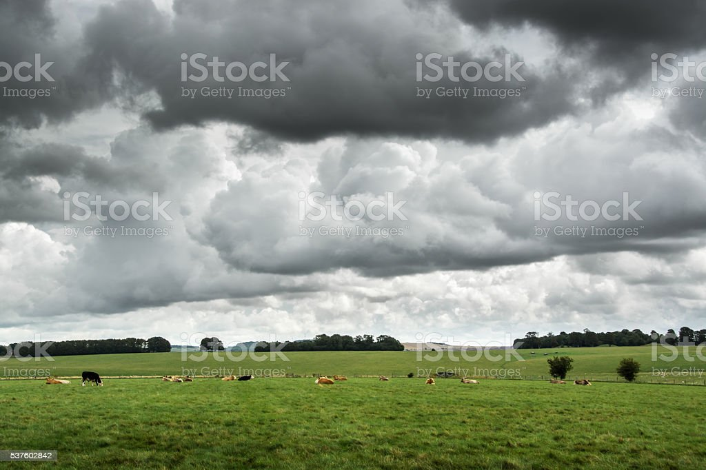 Dark low clouds over cattle field in UK countryside stock photo