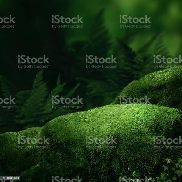 Photo of Dark magic forest