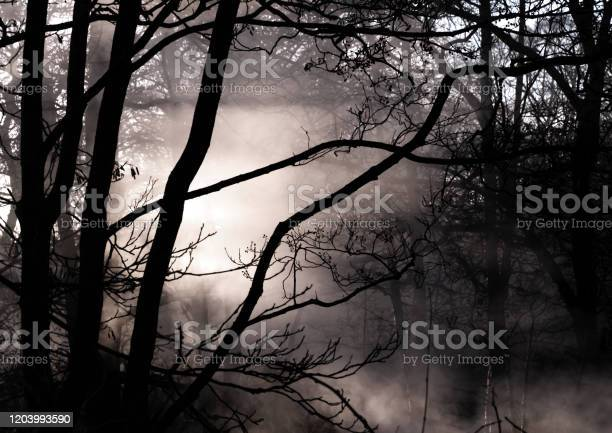 Photo of Dark, Misty and Eerie Forest