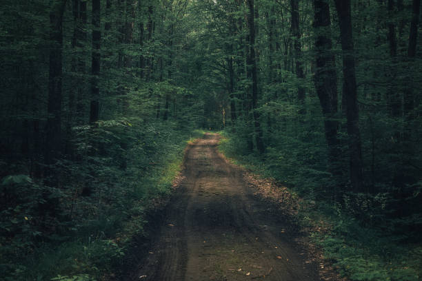 Dark moody mysterious spooky forest with a road crossing it in the middle stock photo